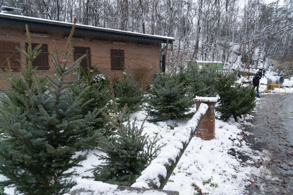 Bild vom Weihnachtsbaumverkauf im Schnee