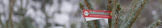 Weihnachtsbäume 2019