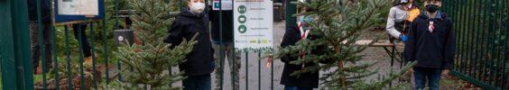 Baumverkauf 19. Dezember 🎄